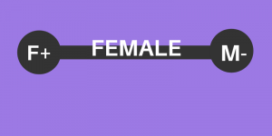 Femininity Masculinity on the Female Spectrum, A Better Future Now