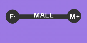 Femininity Masculinity on the Male Spectrum, A Better Future Now